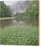 0706-0079 Roark Bluff At Steel Creek 1 Wood Print by Randy Forrester