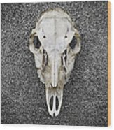 0710-0099 Deer Skull On The Buffalo River Wood Print by Randy Forrester