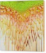 0814a4-5 Wood Print