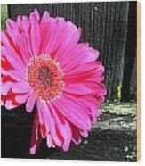 0996c Wood Print