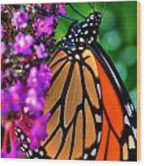 007 Making Things New Via The Butterfly Series Wood Print