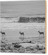 4 Deer In Ocean Black And White Wood Print