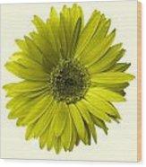 5552c6-004 Wood Print
