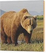 A Brown Grizzly Bear Ursus Arctos Wood Print