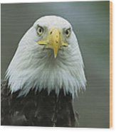 A Close View Of An American Bald Eagle Wood Print