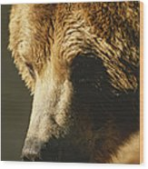A Close View Of The Face Of A Grizzly Wood Print