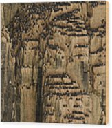 A Colony Of Little Auks Line Jagged Wood Print