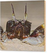 A Crab On The Shore  Wood Print