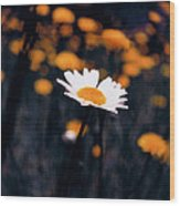 A Daisy Alone Wood Print