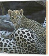A Leopard  Cub, Panthera Pardus Wood Print