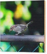 A Little Birdie Told Me Wood Print
