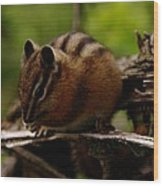 A Little Chipmunk Wood Print