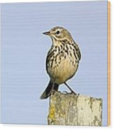 A Meadow Pipit Wood Print