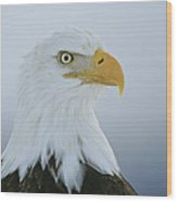 A Portrait Of An American Bald Eagle Wood Print