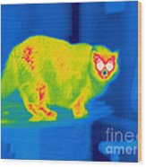 A Thermogram Of A Long Haired Cat Wood Print