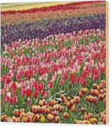 A Tulip Field Wood Print