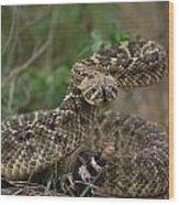 A Western Diamondback Rattlesnake Wood Print
