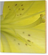 A Yellow Lily Lilium Canadense Wood Print
