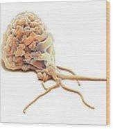 Activated Granulocyte, Sem Wood Print