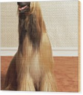 Afghan Hound Sitting In Room Wood Print