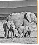 African Elephant In The Masai Mara Wood Print