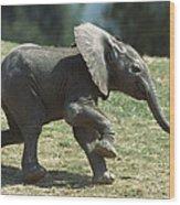 African Elephant Loxodonta Africana Wood Print