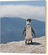 African Penguin Wood Print