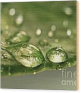 After The Rain Wood Print by Sandra Cunningham