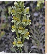 Alaska Lupine Wood Print