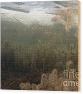 Algae In A Frozen Pond Wood Print