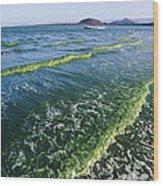 Algal Bloom Wood Print