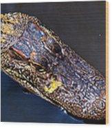 Alligator In Mississippi River Wood Print