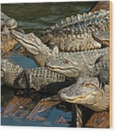 Alligator Pool Party Wood Print