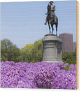 Allium Flower At The Boston Common Wood Print