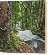 Along The Trail Wood Print