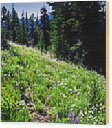 Alpine Meadow Vii At Mount Rainier Wood Print