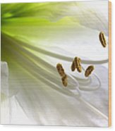 Amaryllis Wood Print by Jane Rix