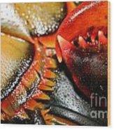 American Lobsters Wood Print