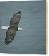 An American Bald Eagle, Haliaeetus Wood Print