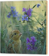 An Attwaters Prairie Chick Surrounded Wood Print