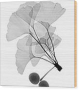 An X-ray Of Ginko Leaves Wood Print
