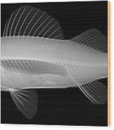 An X-ray Of Yellow Perch Wood Print