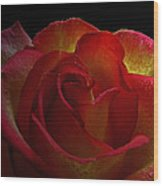 Annaversary Rose I  Wood Print
