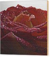 Annaversary Rose II Wood Print
