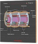 Annelid Worm Anatomy Wood Print by Francis Leroy, Biocosmos