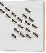 Ants, Forming An Arrow Wood Print