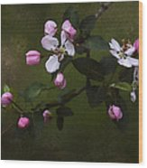 Apple Blossom Time Wood Print