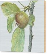 Apple Branch Wood Print by Scott Bennett