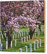 Arlington Cherry Trees Wood Print