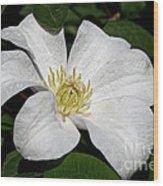 Artic White Wood Print